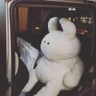 UAMOU's Business trip! @nehan_tokyo ウアモウ会長、青山に向けて出発 「きみ、くるまをだしたまえ」